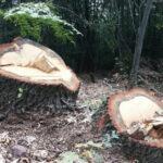 Двама етрополци са задържани с незаконно добита дървесина